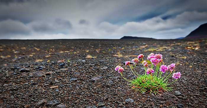 Life Alone, Iceland