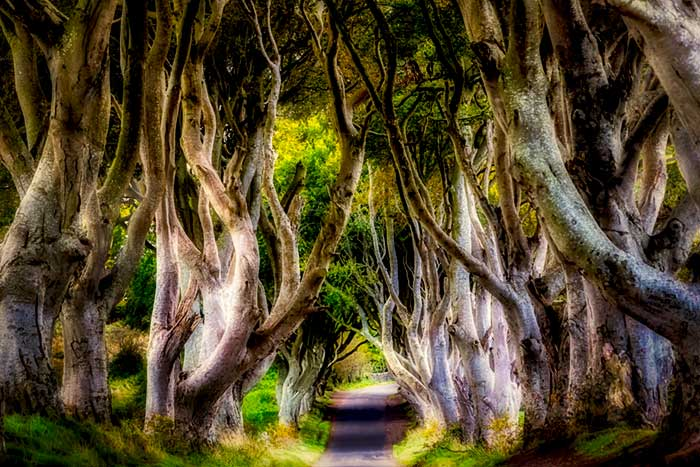 Dark Hedges, Game of Thrones, Northern Ireland