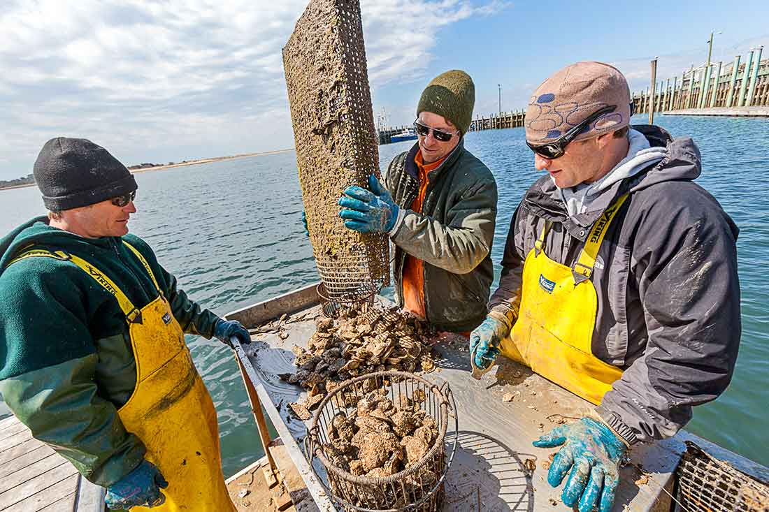 Fishermen clean their shellfish.